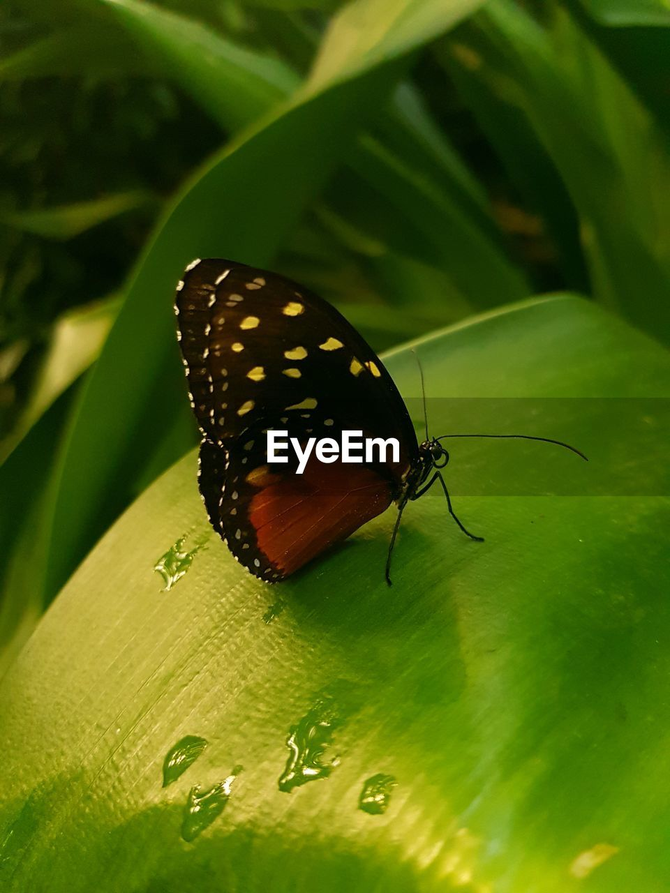 insect, invertebrate, animal wildlife, animal, animals in the wild, animal themes, one animal, plant part, leaf, close-up, nature, green color, animal wing, no people, day, selective focus, beauty in nature, plant, animal markings, growth, butterfly - insect, butterfly