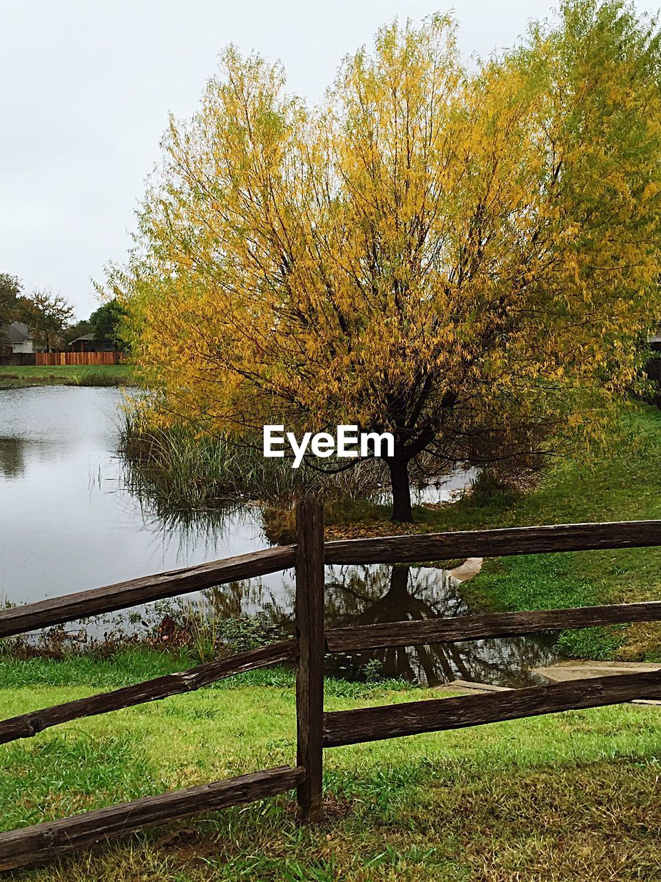 tree, nature, beauty in nature, water, autumn, lake, tranquility, scenics, tranquil scene, no people, outdoors, day, grass, leaf, sky