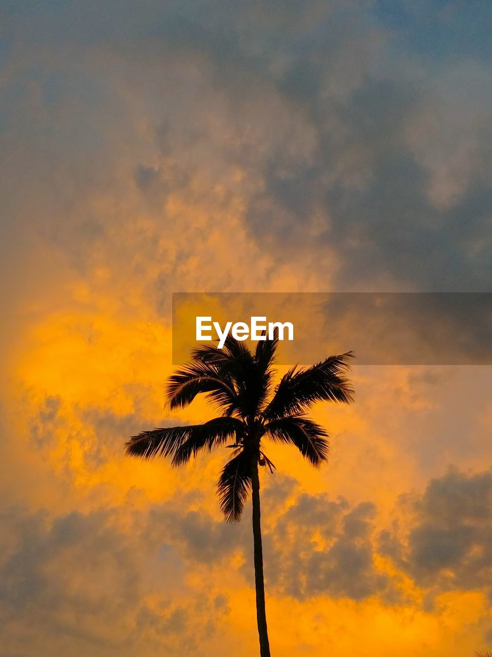 sky, palm tree, sunset, tropical climate, cloud - sky, silhouette, low angle view, beauty in nature, tree, plant, nature, scenics - nature, tranquility, no people, orange color, tranquil scene, growth, tree trunk, coconut palm tree, trunk, outdoors, tropical tree, romantic sky, palm leaf