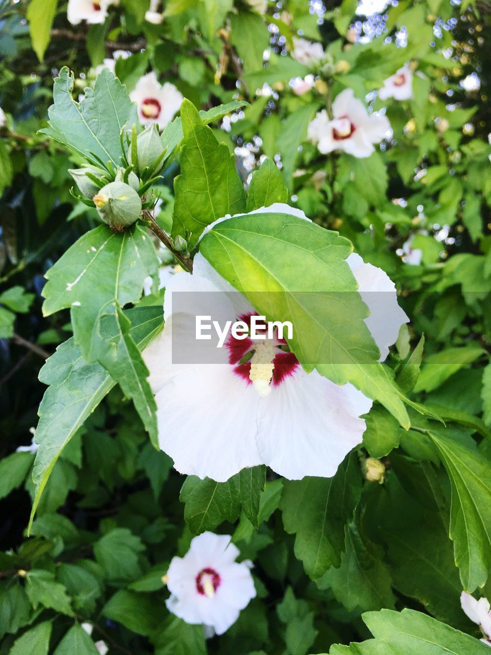 growth, flower, green color, leaf, petal, nature, plant, white color, freshness, day, fragility, beauty in nature, flower head, outdoors, no people, blooming, close-up