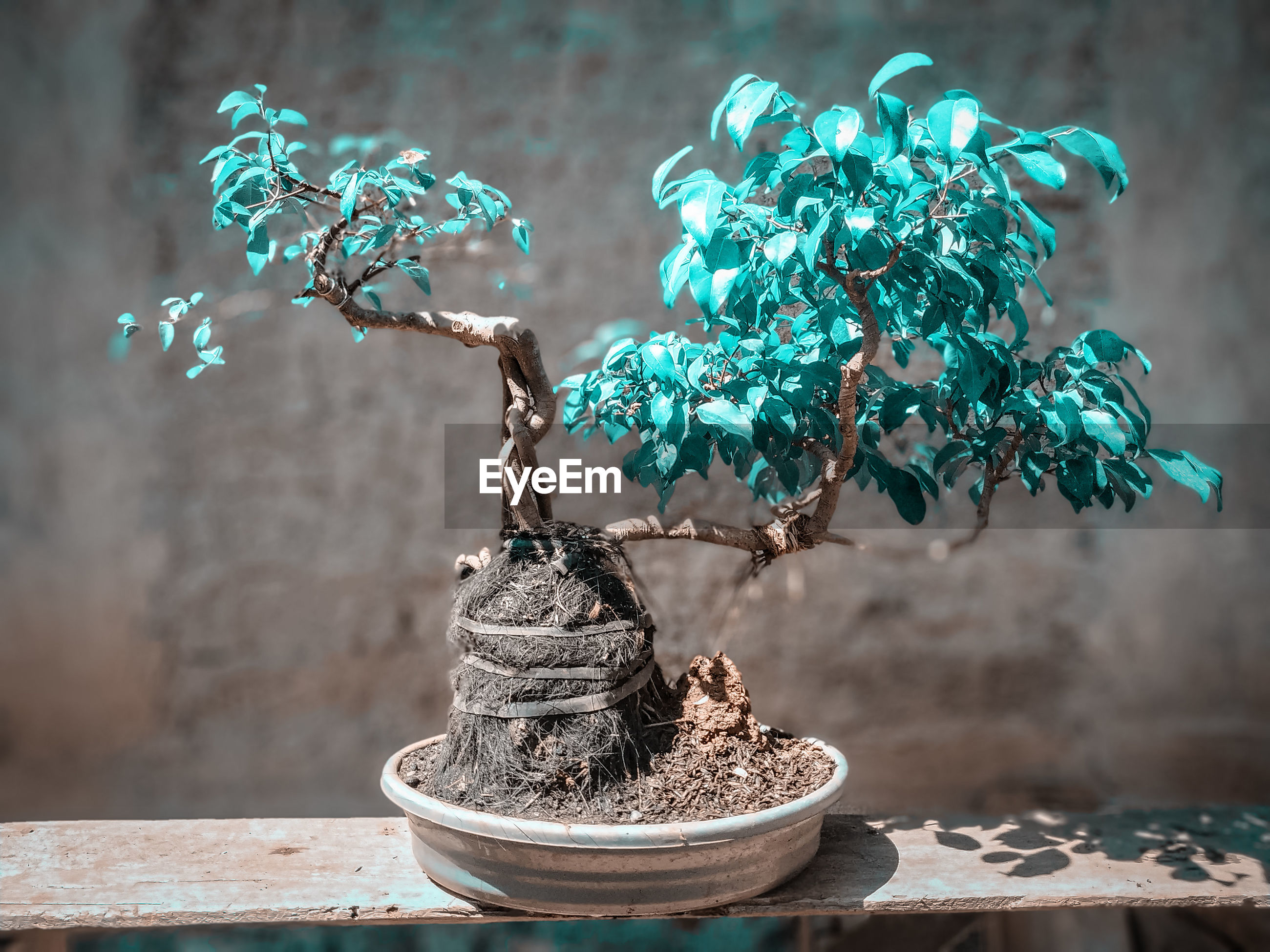 CLOSE-UP OF POTTED PLANT ON TABLE AGAINST TREES