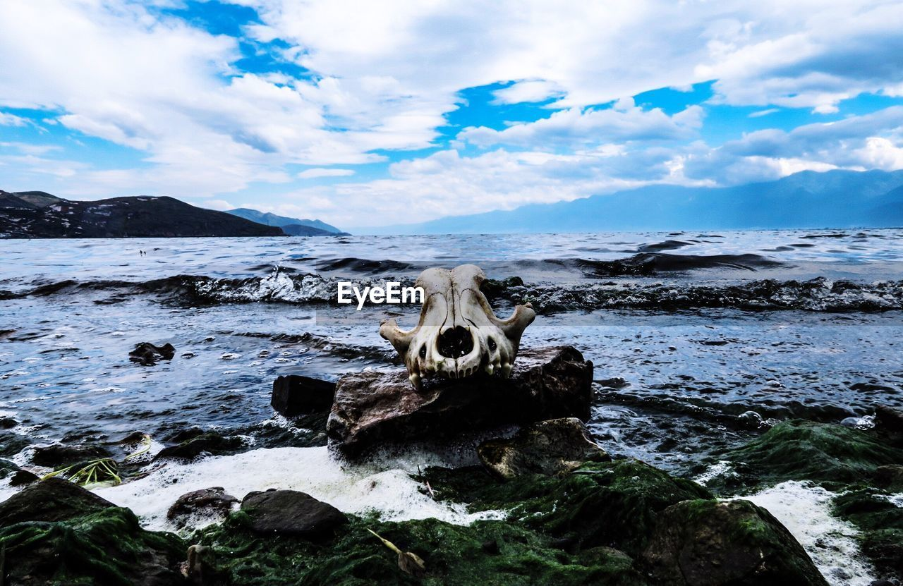 Animal Skull On The Shore Against Clouds
