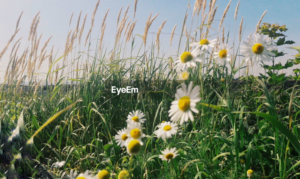 flower, growth, yellow, nature, plant, field, freshness, beauty in nature, blooming, no people, fragility, spring, grass, outdoors, day, flower head