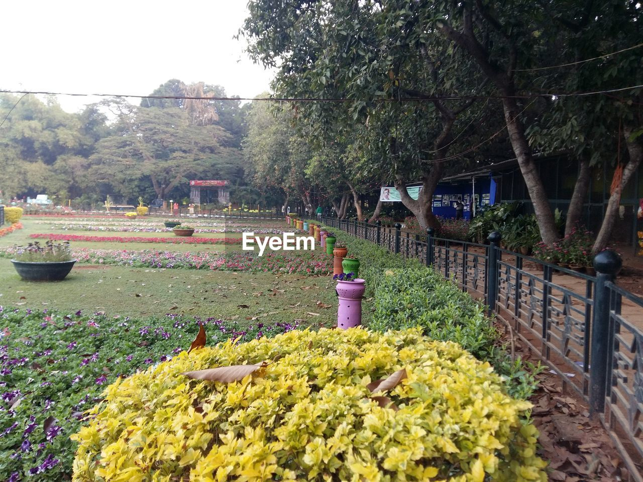 Scenic View Of Park