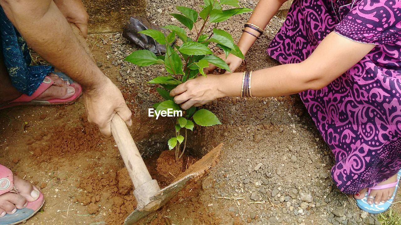 Low section of people planting plant