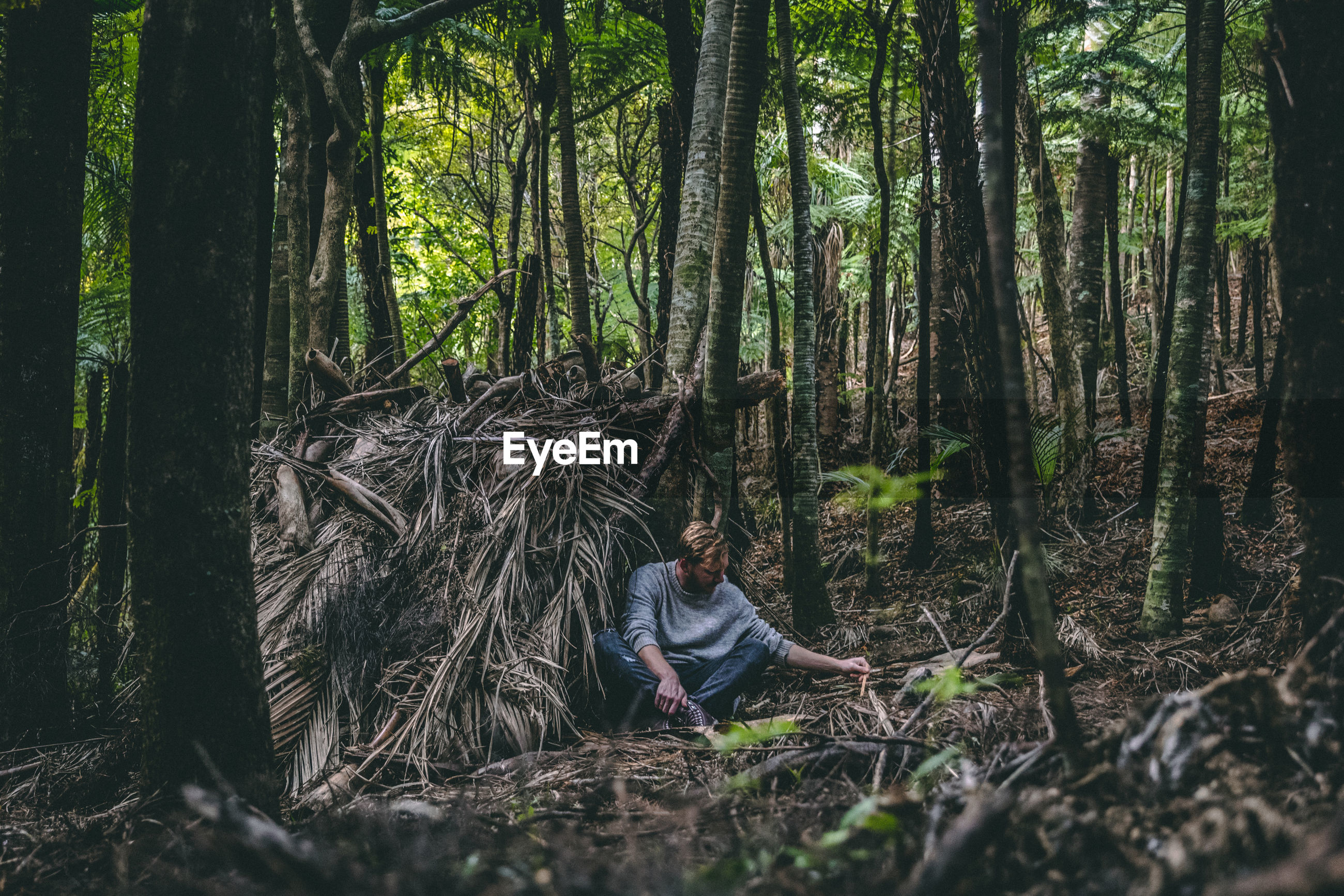 Man sitting amidst trees in forest