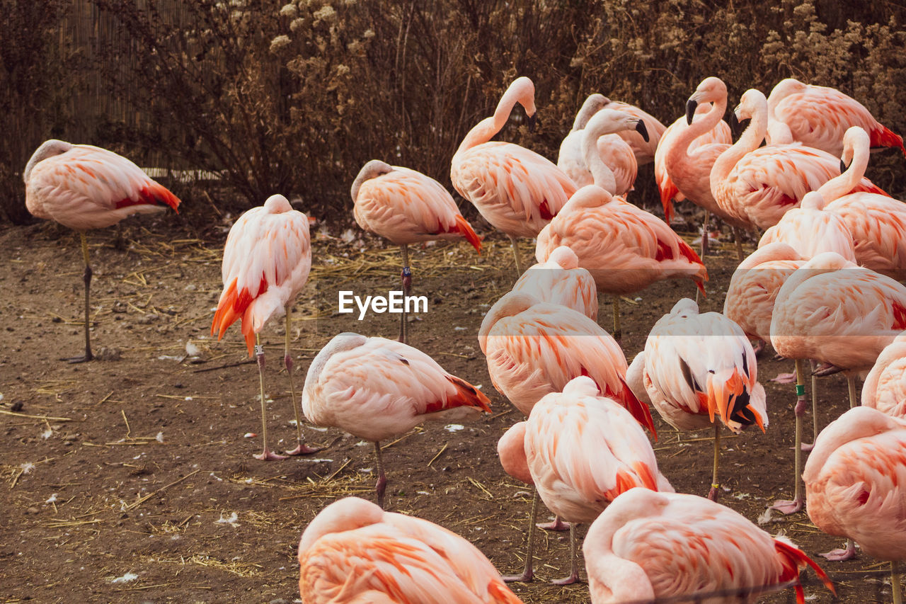 flamingo, group of animals, animal, animal themes, bird, vertebrate, animals in the wild, large group of animals, animal wildlife, pink color, no people, water, beauty in nature, nature, day, field, land, flock of birds, lake, outdoors, freshwater bird, animal neck