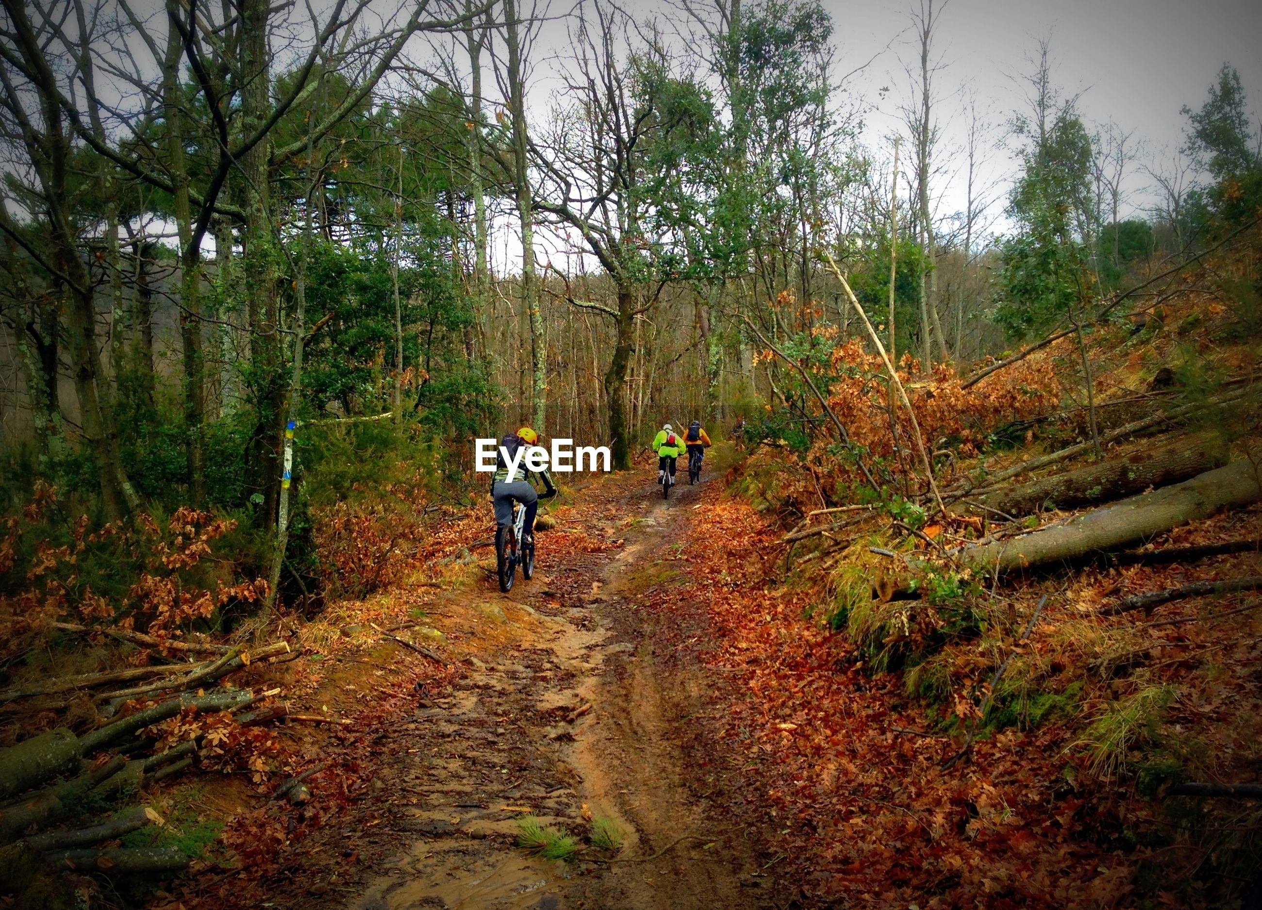 Men cycling on pathway amidst trees