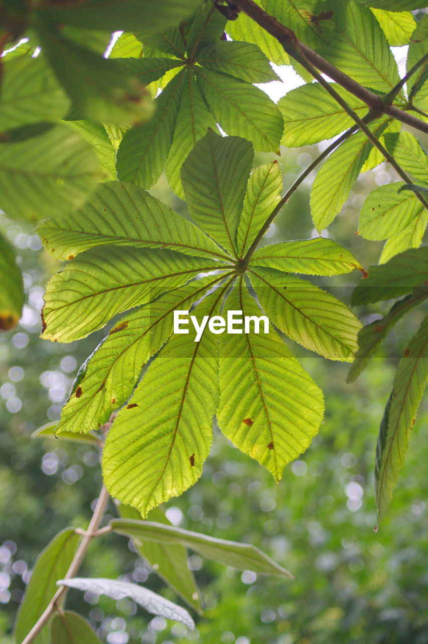 leaf, plant part, plant, green color, growth, tree, nature, close-up, beauty in nature, day, no people, outdoors, focus on foreground, branch, freshness, foliage, lush foliage, low angle view, environment, tranquility, leaves