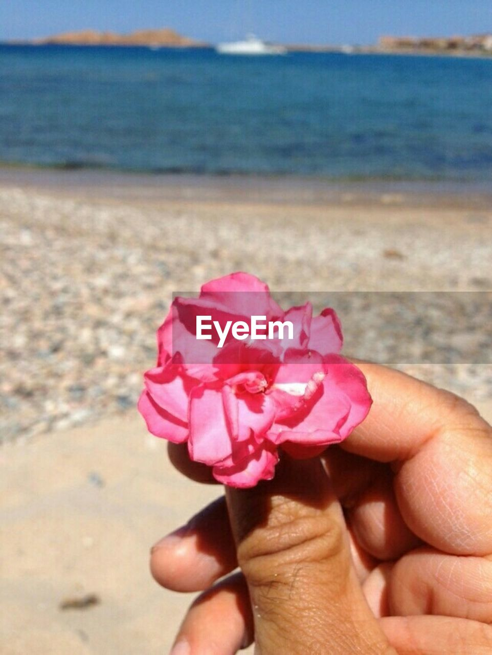 human hand, human body part, beach, sea, one person, nature, beauty in nature, flower, horizon over water, pink color, real people, sand, water, outdoors, holding, focus on foreground, day, close-up, sky, fragility, flower head, people