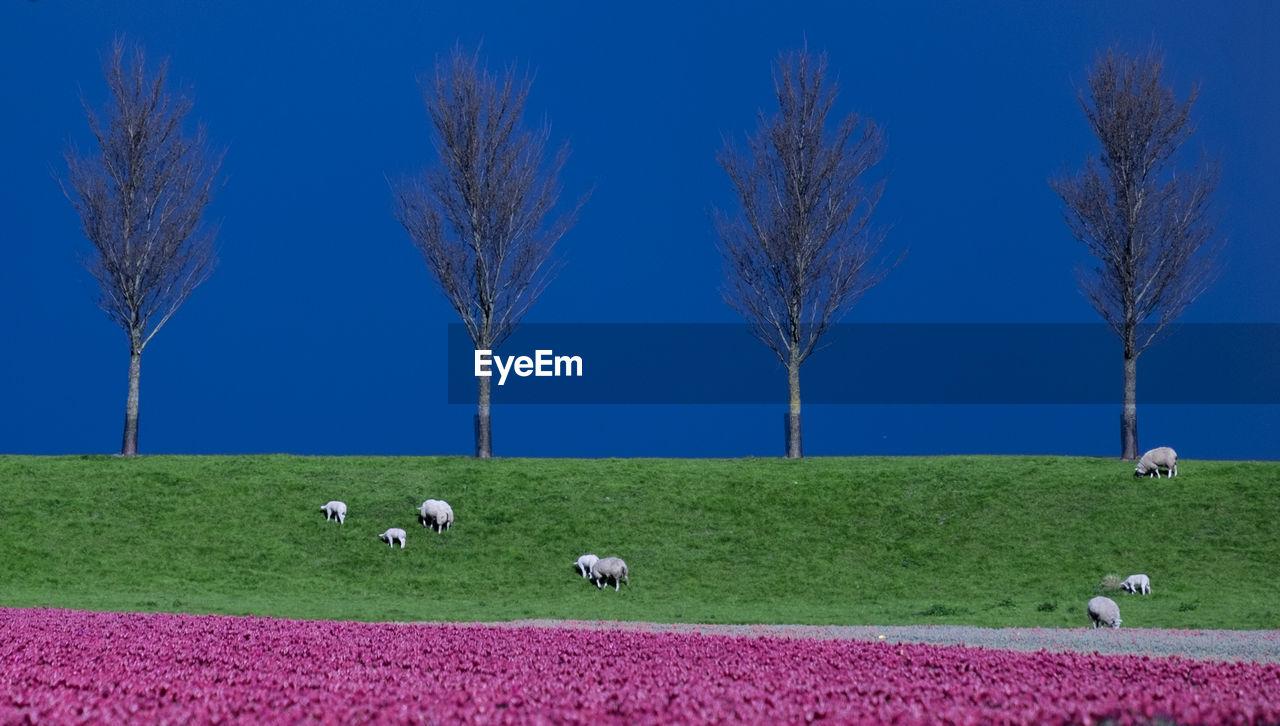 Sheep grazing on landscape against blue sky