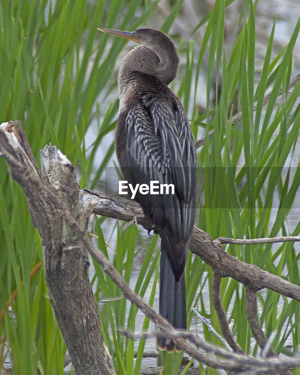 Bird Perching On Branch In Lake