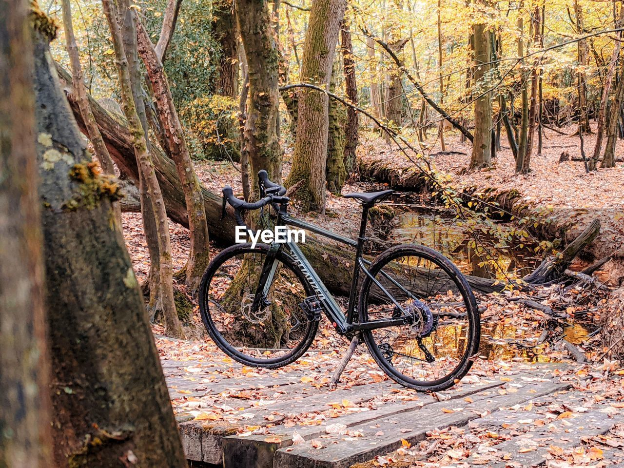 BICYCLE PARKED BY TREE IN FOREST