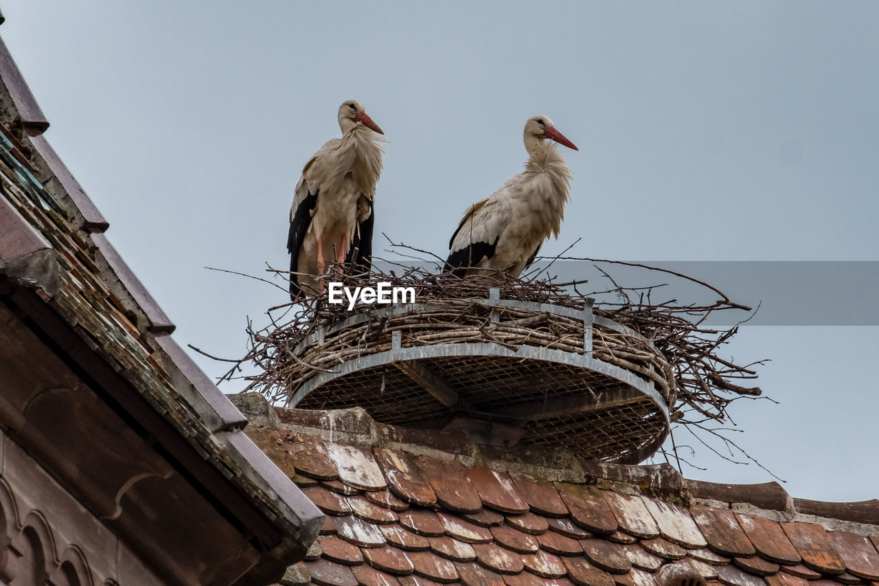 LOW ANGLE VIEW OF BIRDS PERCHING ON ROOF OF BUILDING