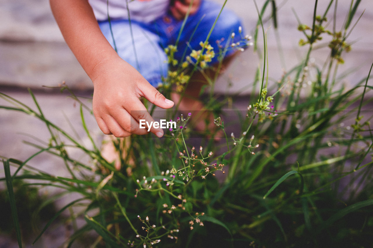 Low section of boy holding flowering plants