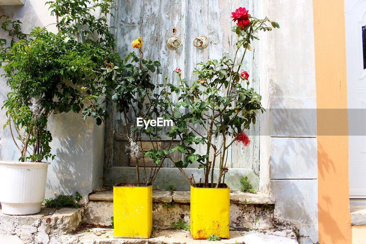 plant, growth, day, flower, potted plant, no people, architecture, built structure, outdoors, yellow, nature, building exterior, fragility, beauty in nature, freshness