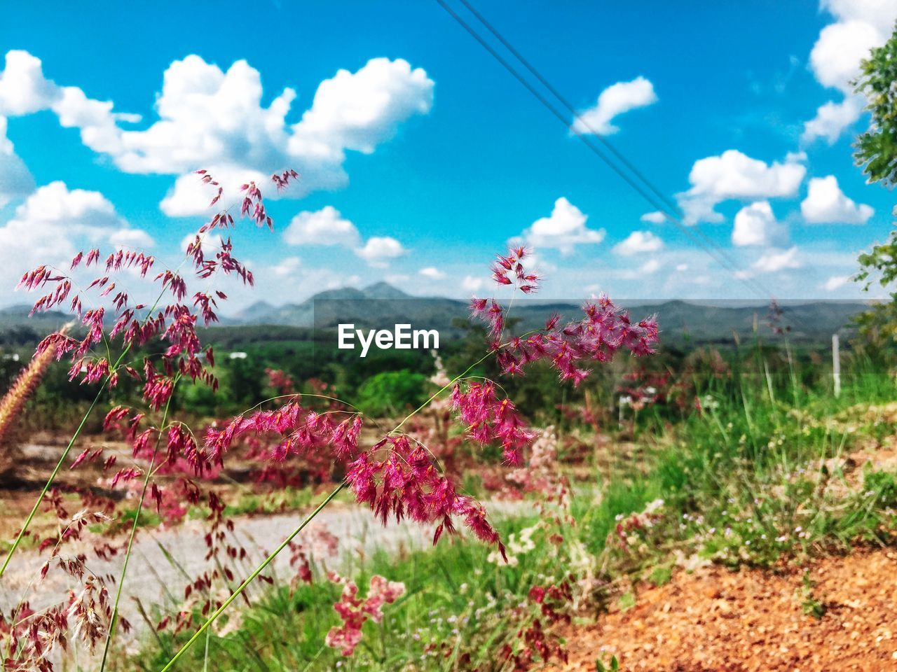 flowering plant, flower, plant, beauty in nature, cloud - sky, sky, growth, nature, day, landscape, freshness, no people, field, pink color, scenics - nature, land, environment, tranquil scene, tranquility, fragility, outdoors