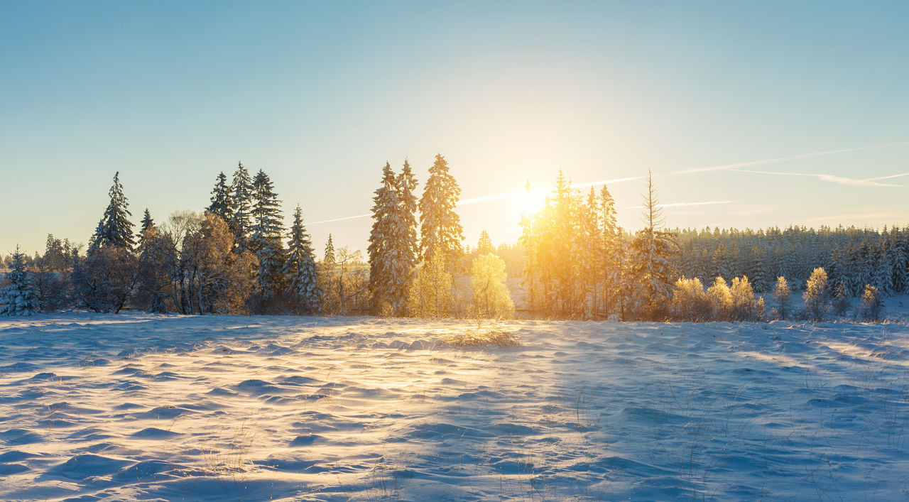 sky, winter, cold temperature, snow, beauty in nature, tree, plant, clear sky, scenics - nature, tranquility, nature, sunlight, non-urban scene, tranquil scene, no people, environment, sun, land, frozen, outdoors