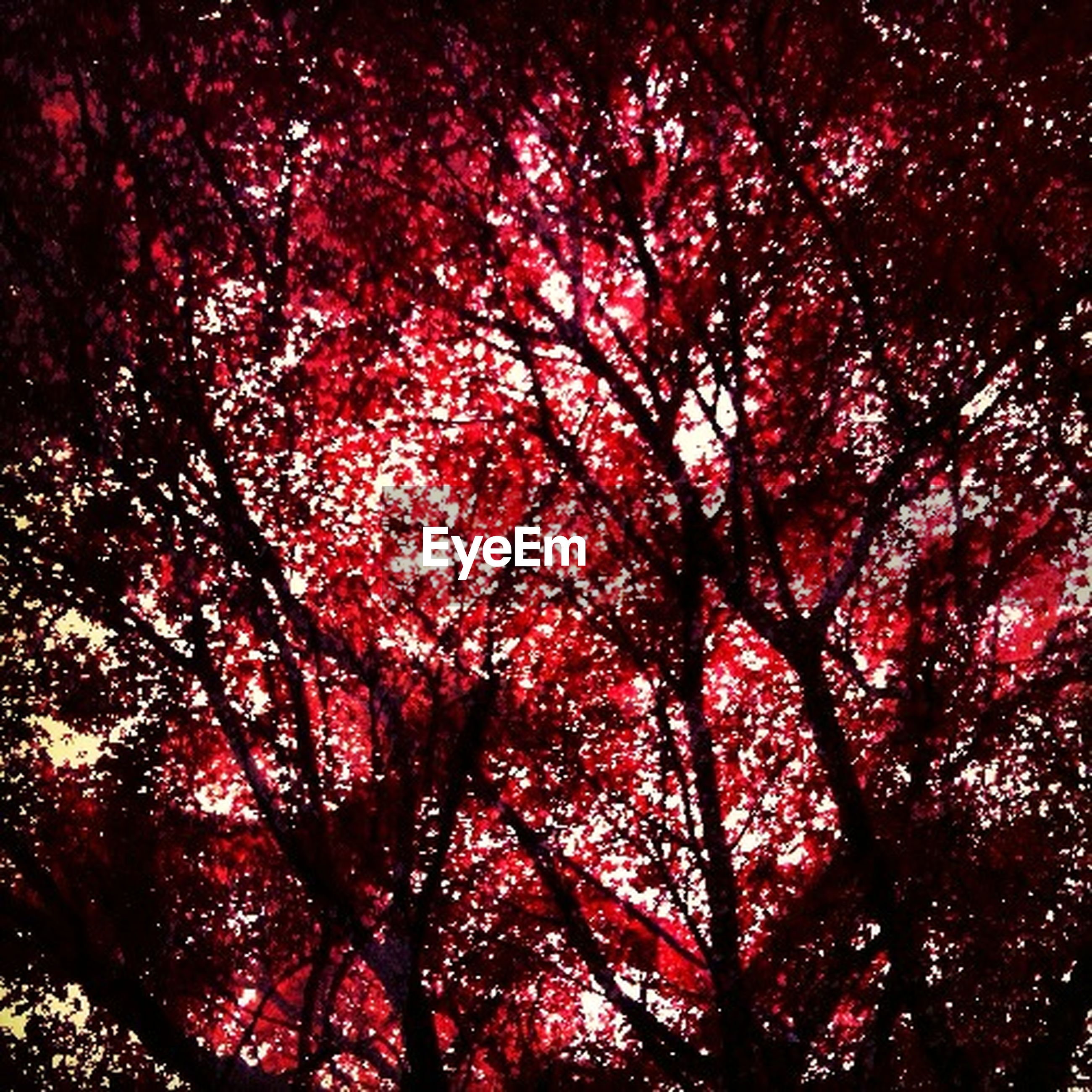 tree, low angle view, branch, red, autumn, backgrounds, beauty in nature, growth, full frame, nature, tranquility, change, season, scenics, sky, outdoors, no people, day, leaf, silhouette