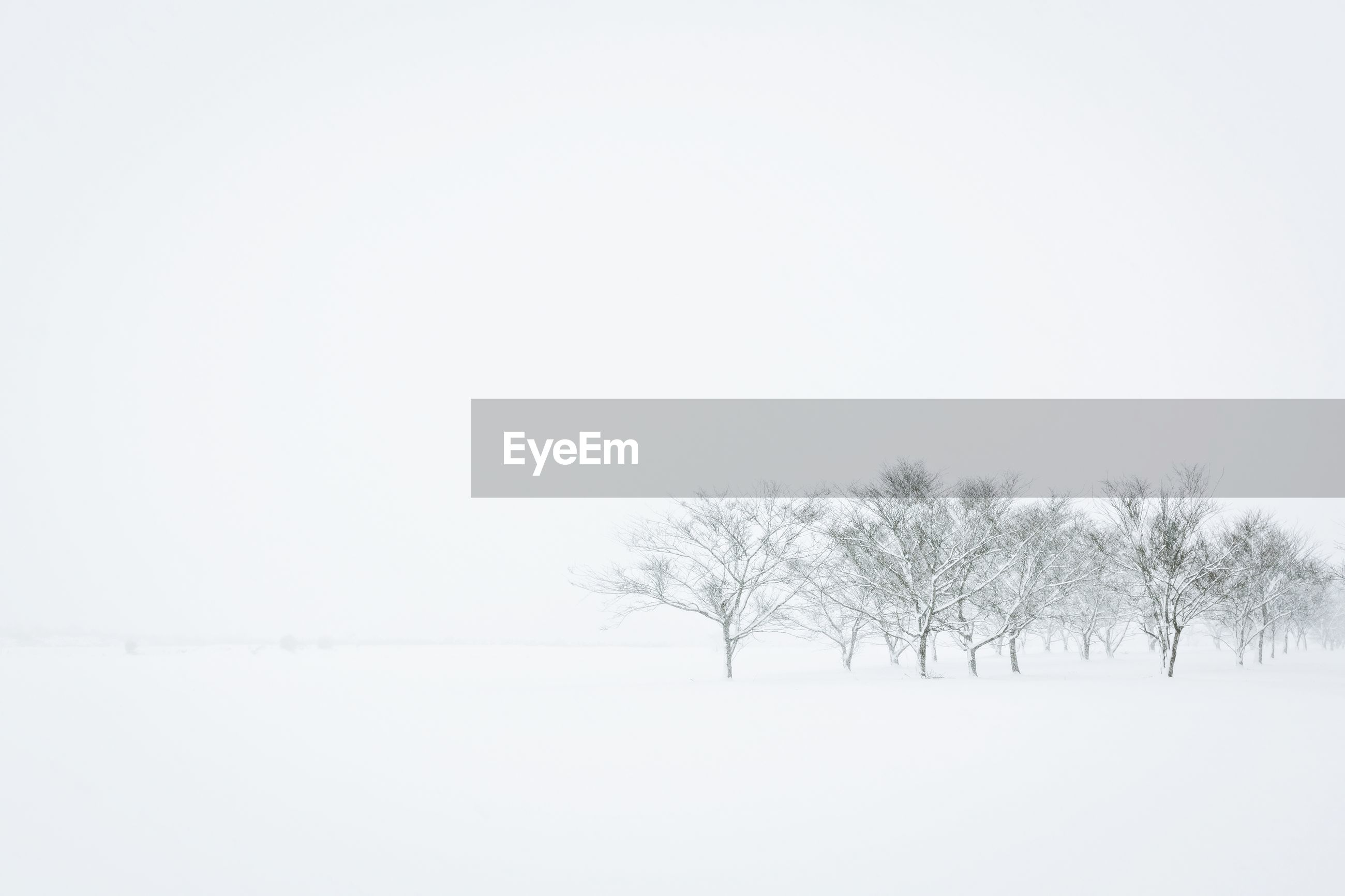 Trees on snow covered field against clear sky