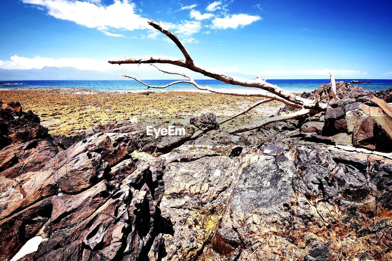 sea, horizon over water, tranquility, tranquil scene, nature, sky, water, scenics, day, outdoors, beauty in nature, no people, cloud - sky, sunlight, beach, dead tree, tree, close-up