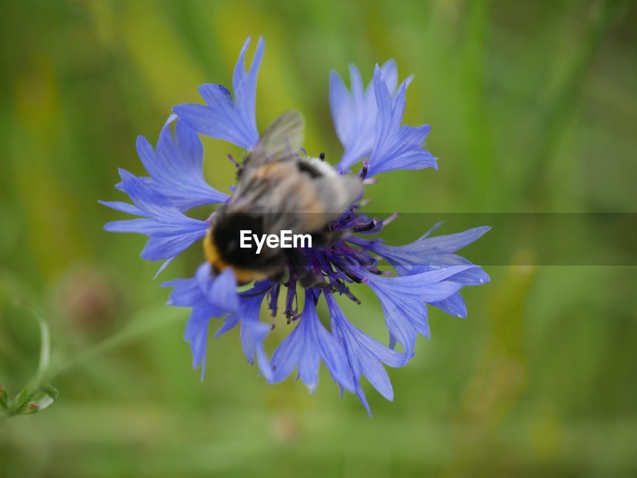 flowering plant, flower, animal themes, fragility, invertebrate, insect, animal, petal, vulnerability, one animal, flower head, animal wildlife, beauty in nature, plant, growth, animals in the wild, freshness, bee, close-up, pollination, purple, no people, pollen, bumblebee