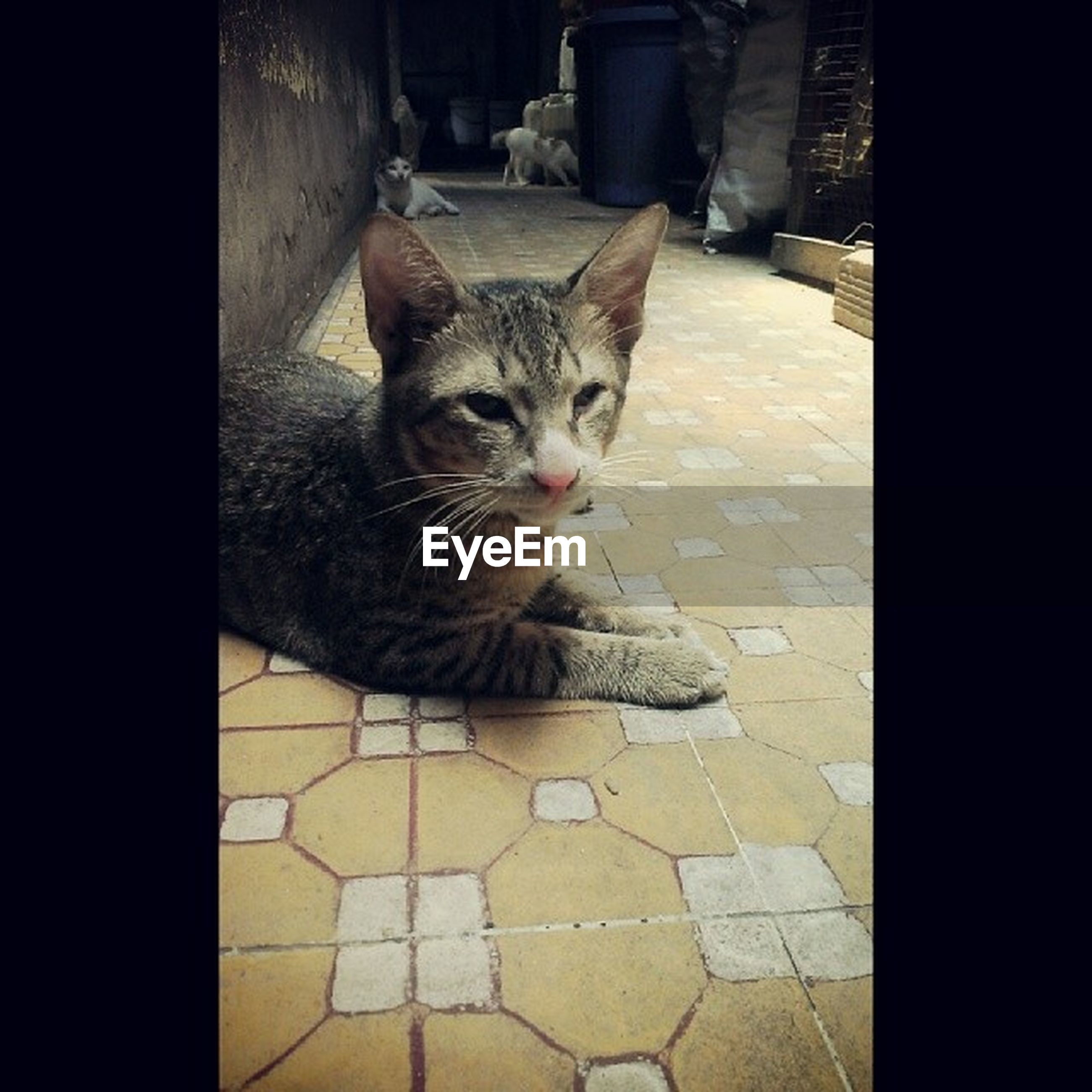 domestic cat, pets, one animal, cat, animal themes, domestic animals, feline, mammal, whisker, portrait, indoors, looking at camera, sitting, relaxation, flooring, alertness, full length, high angle view, no people, floor