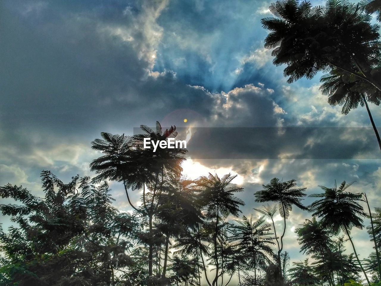 palm tree, low angle view, tree, sky, cloud - sky, day, no people, nature, growth, outdoors, beauty in nature