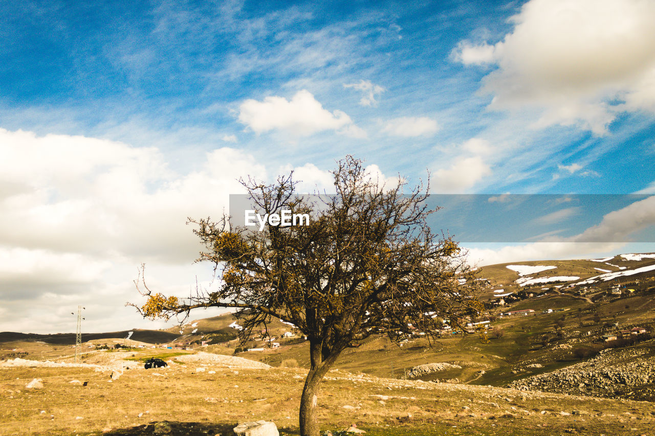 cloud - sky, sky, beauty in nature, plant, tree, tranquil scene, scenics - nature, tranquility, nature, day, no people, non-urban scene, landscape, environment, land, sunlight, growth, mountain, outdoors, field