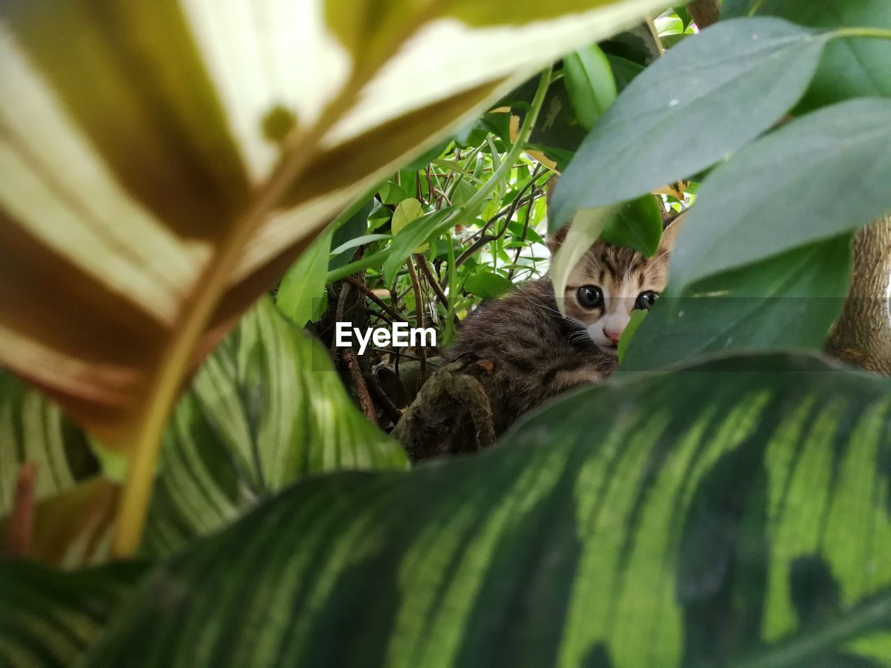animal themes, animal, one animal, leaf, plant part, vertebrate, mammal, plant, selective focus, animal wildlife, animals in the wild, no people, green color, nature, domestic cat, cat, feline, portrait, looking at camera, day, outdoors, leaves, whisker