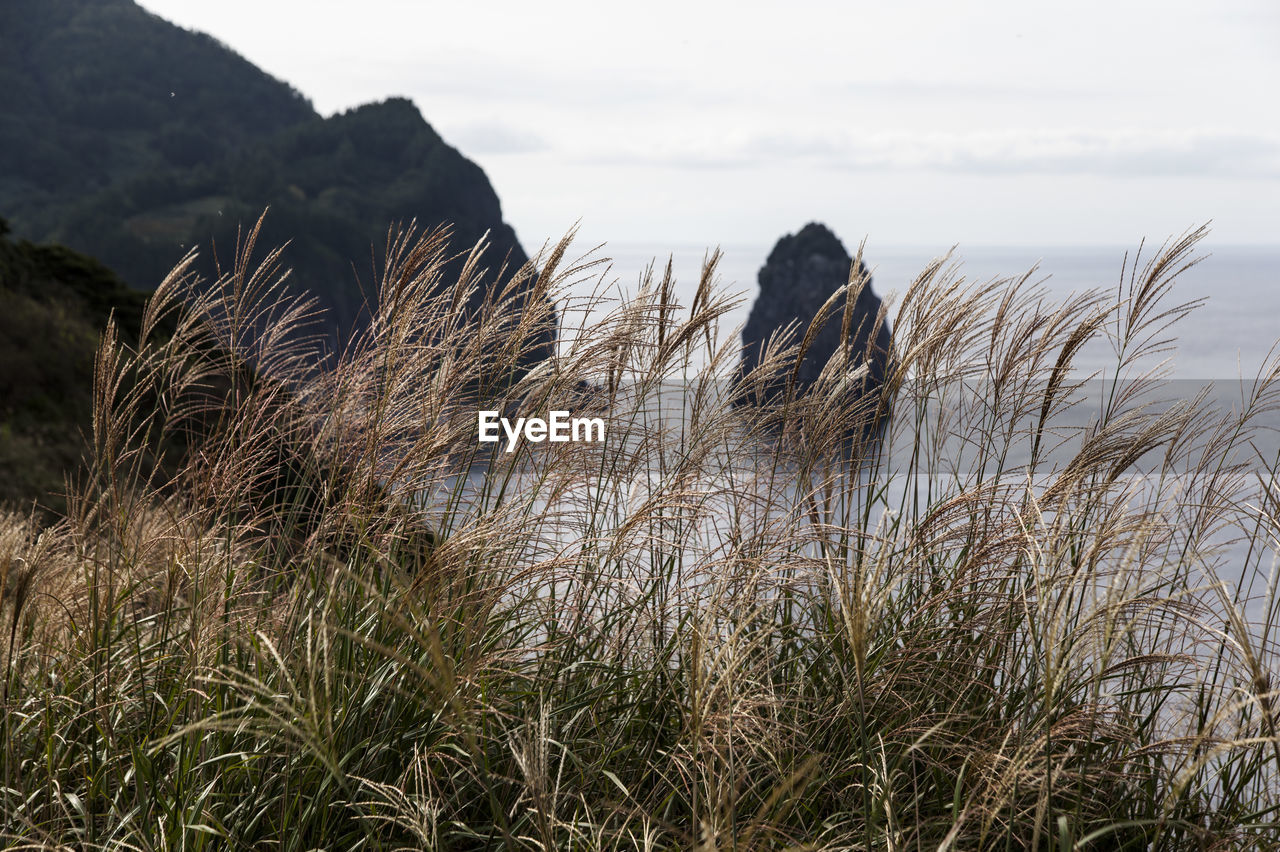 Grass Growing On Mountain At Ulleungdo Island