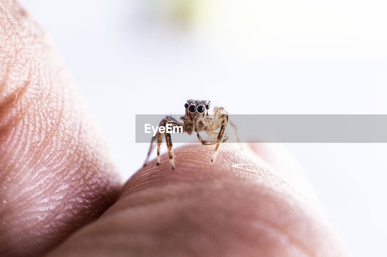 Close-Up Of Spider On Hand