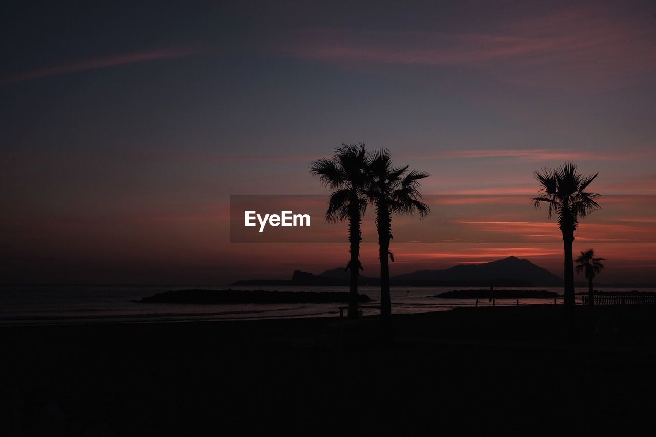palm tree, sunset, silhouette, tree, beauty in nature, tranquility, scenics, tranquil scene, nature, sea, beach, sky, no people, tree trunk, outdoors, water, horizon over water
