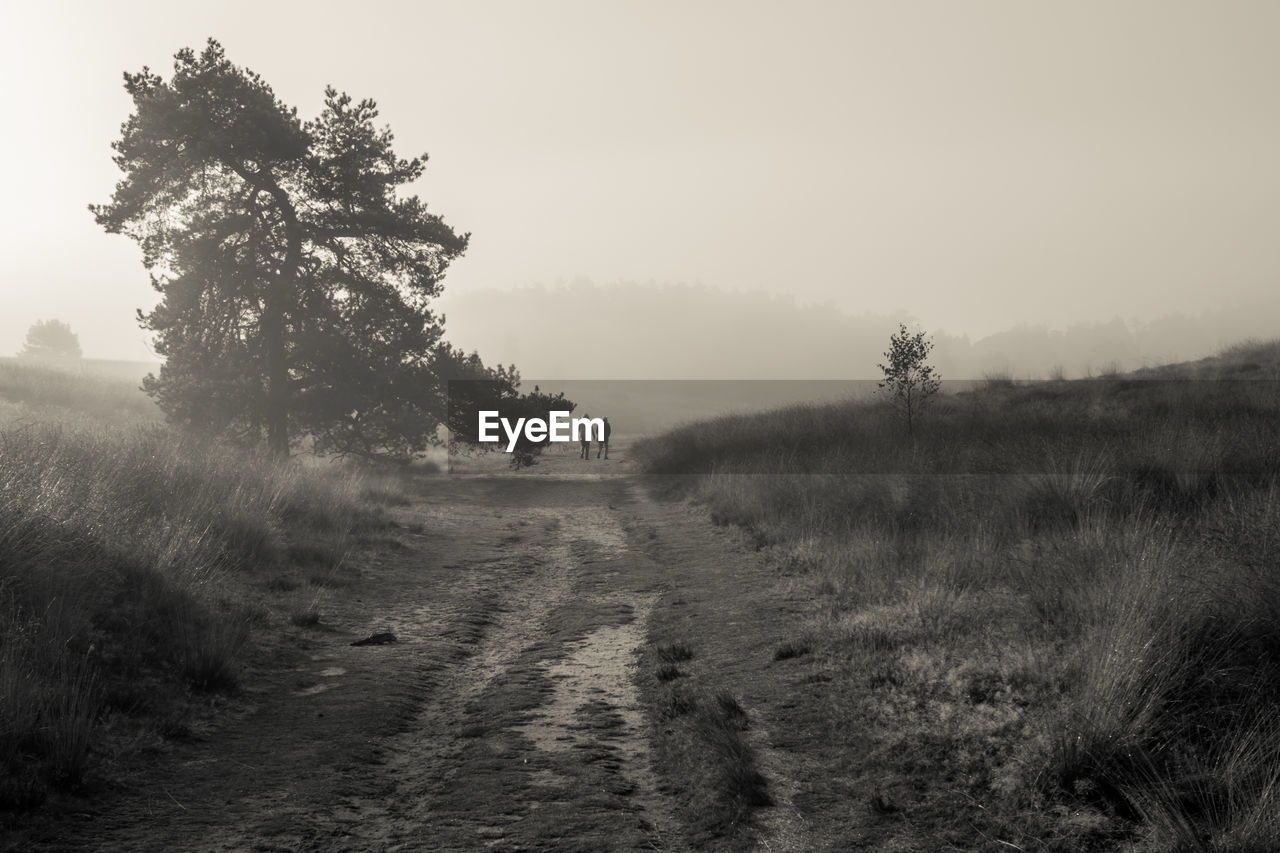 Dirt Road On Grassy Field Against Sky During Foggy Weather