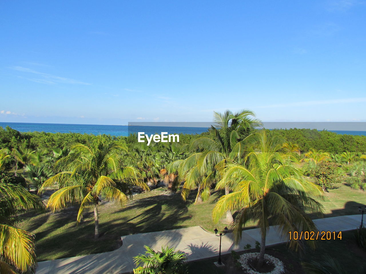 sea, horizon over water, nature, sky, palm tree, scenics, beauty in nature, blue, tranquil scene, tranquility, beach, day, no people, outdoors, water, clear sky, landscape, tree