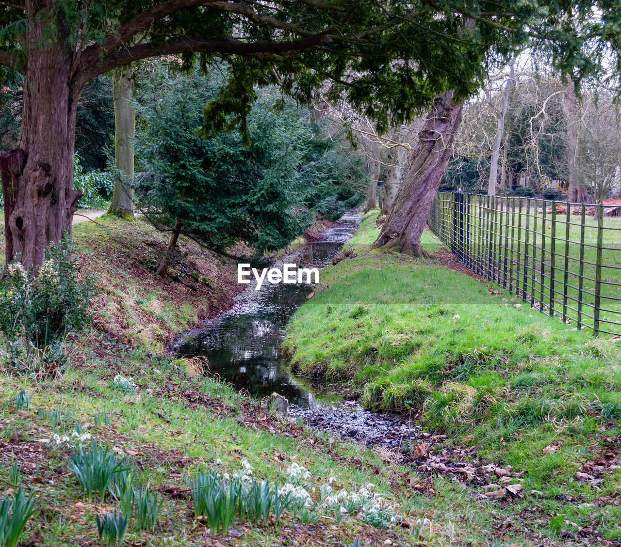 plant, tree, growth, nature, land, no people, tranquility, grass, forest, green color, water, day, tranquil scene, beauty in nature, boundary, fence, barrier, scenics - nature, landscape, outdoors