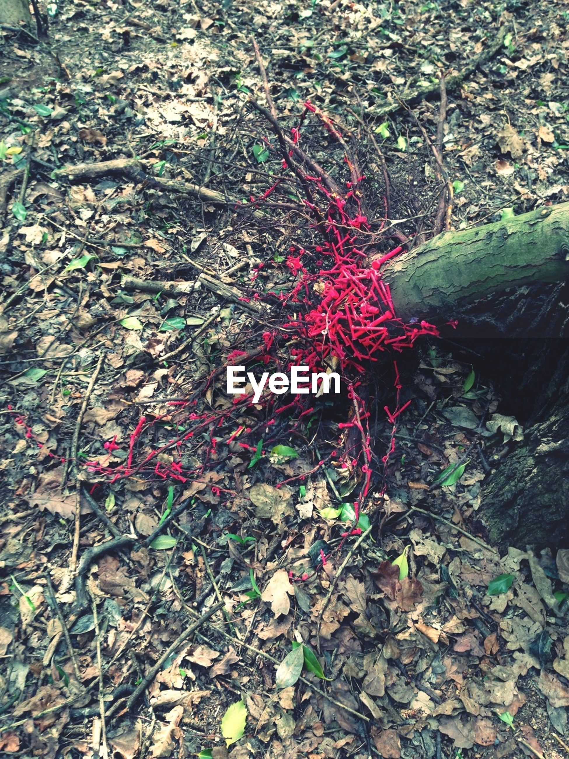 growth, plant, leaf, high angle view, nature, red, autumn, field, day, outdoors, tranquility, fallen, flower, beauty in nature, no people, dry, change, growing, ground, forest