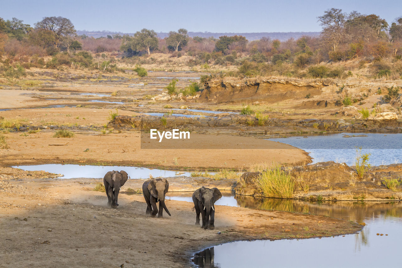 High angle view of elephants on land against clear sky