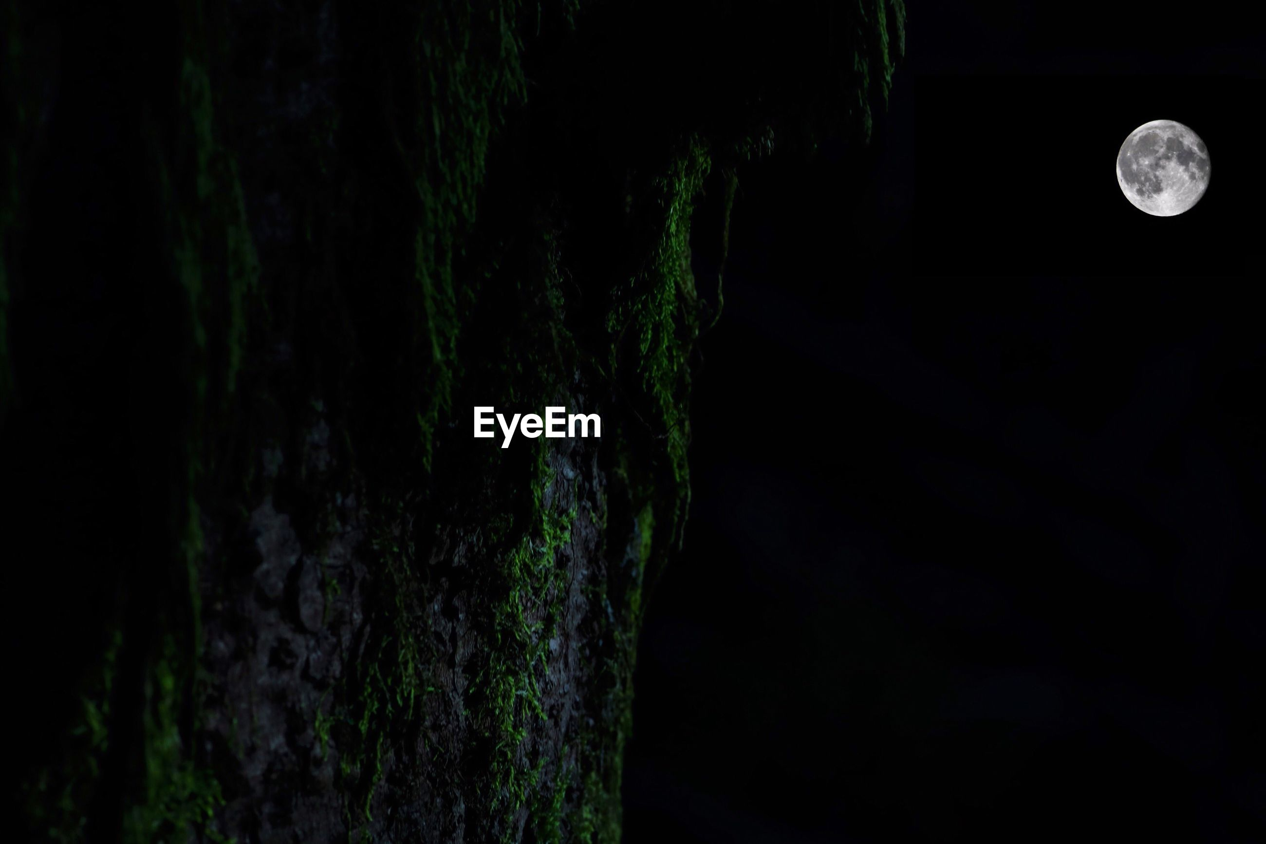 CLOSE-UP OF TREE TRUNK AGAINST MOON