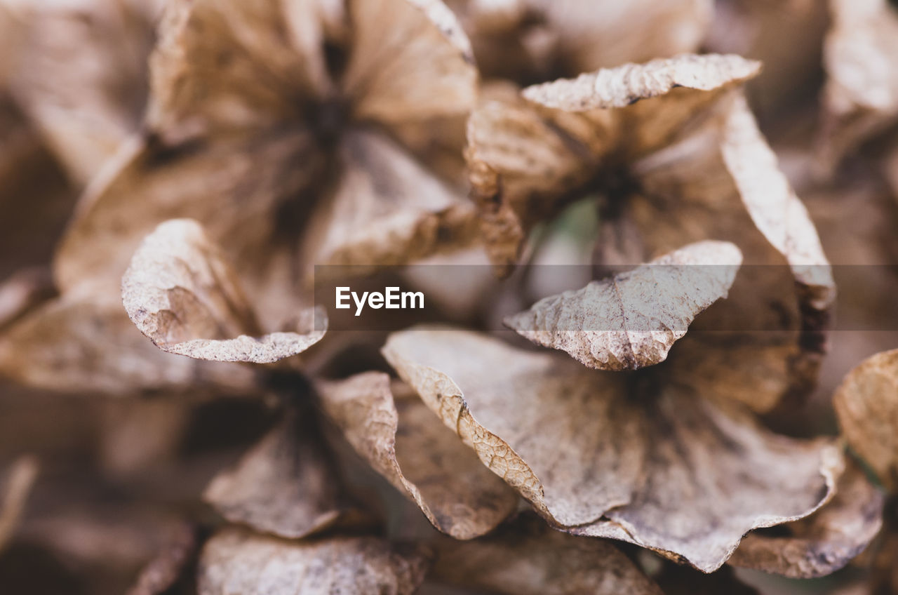 close-up, no people, selective focus, brown, backgrounds, dry, full frame, nature, food and drink, food, plant, focus on foreground, beauty in nature, still life, day, pattern, large group of objects, leaves, seasoning, leaf, dried