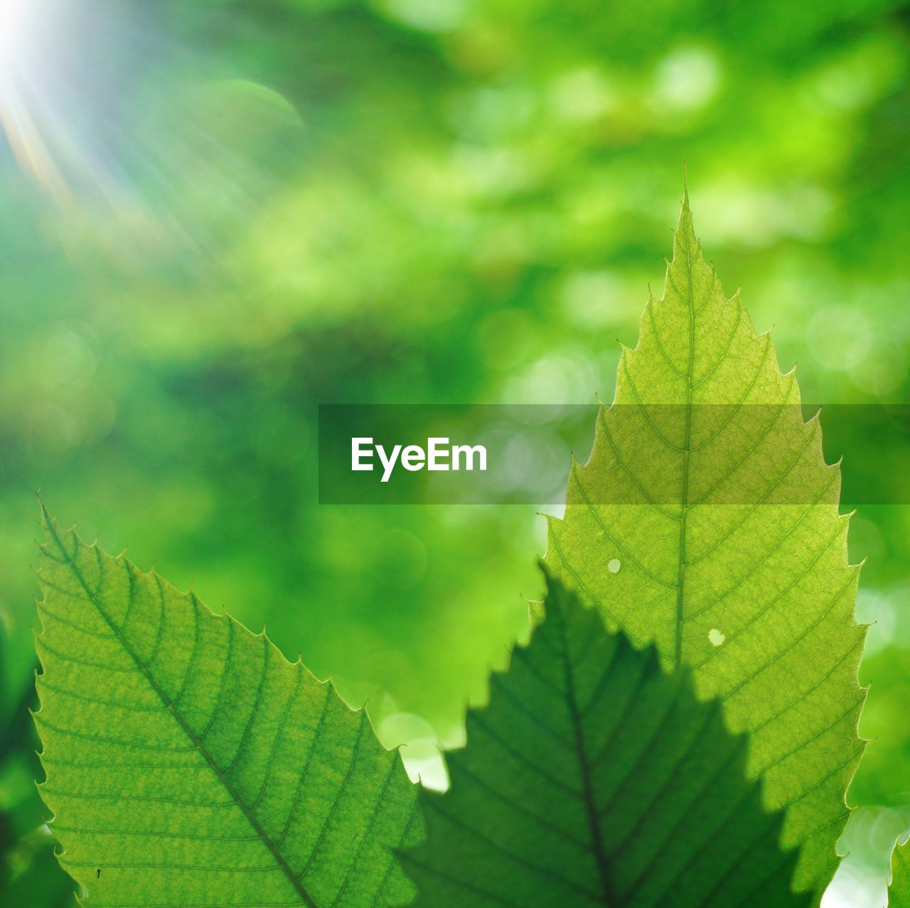 leaf, plant part, green color, plant, nature, growth, beauty in nature, leaf vein, close-up, day, no people, sunlight, focus on foreground, outdoors, selective focus, leaves, natural pattern, autumn, tranquility, tree, focus