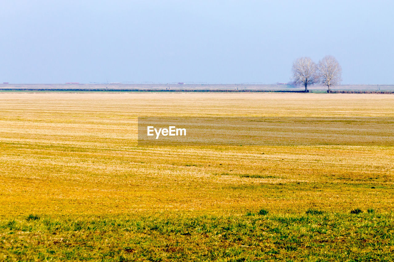 sky, plant, environment, scenics - nature, tranquil scene, landscape, tree, tranquility, field, beauty in nature, land, grass, no people, clear sky, nature, copy space, day, non-urban scene, growth, outdoors