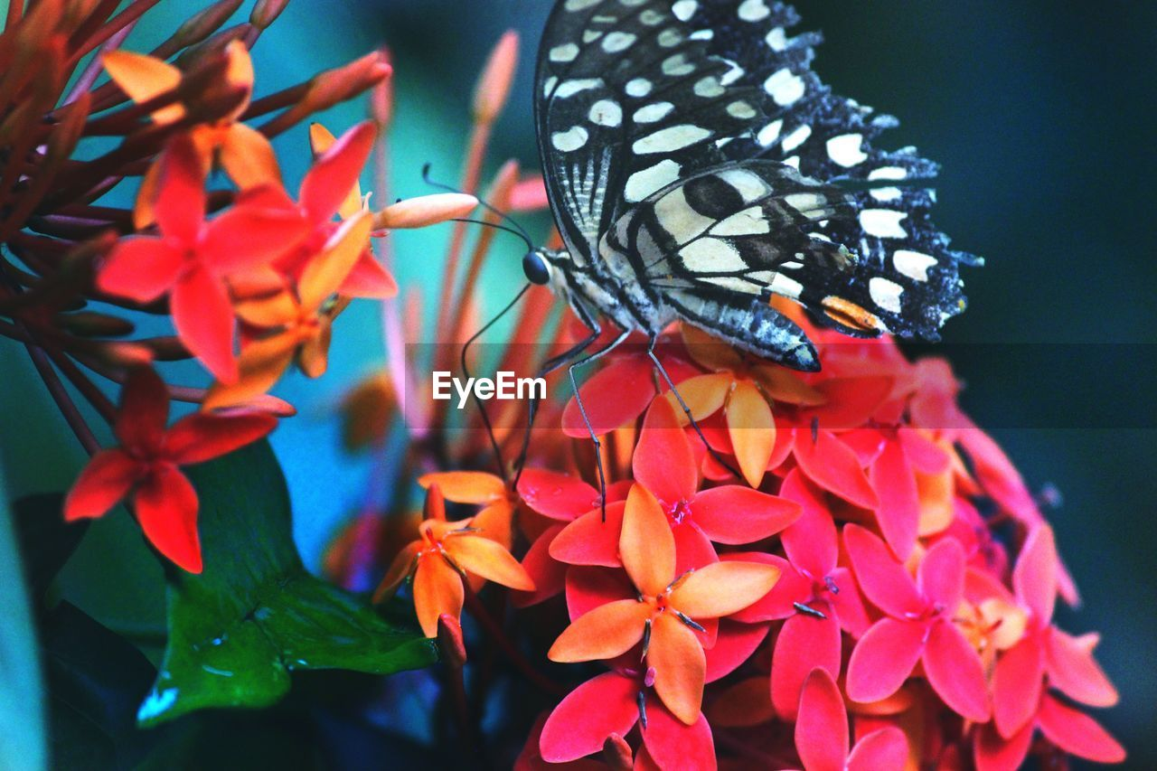 flower, flowering plant, beauty in nature, plant, petal, animal themes, insect, invertebrate, one animal, close-up, growth, animal, freshness, animals in the wild, animal wildlife, nature, vulnerability, fragility, flower head, no people, animal wing, butterfly - insect, outdoors, pollination, pollen, lantana, butterfly