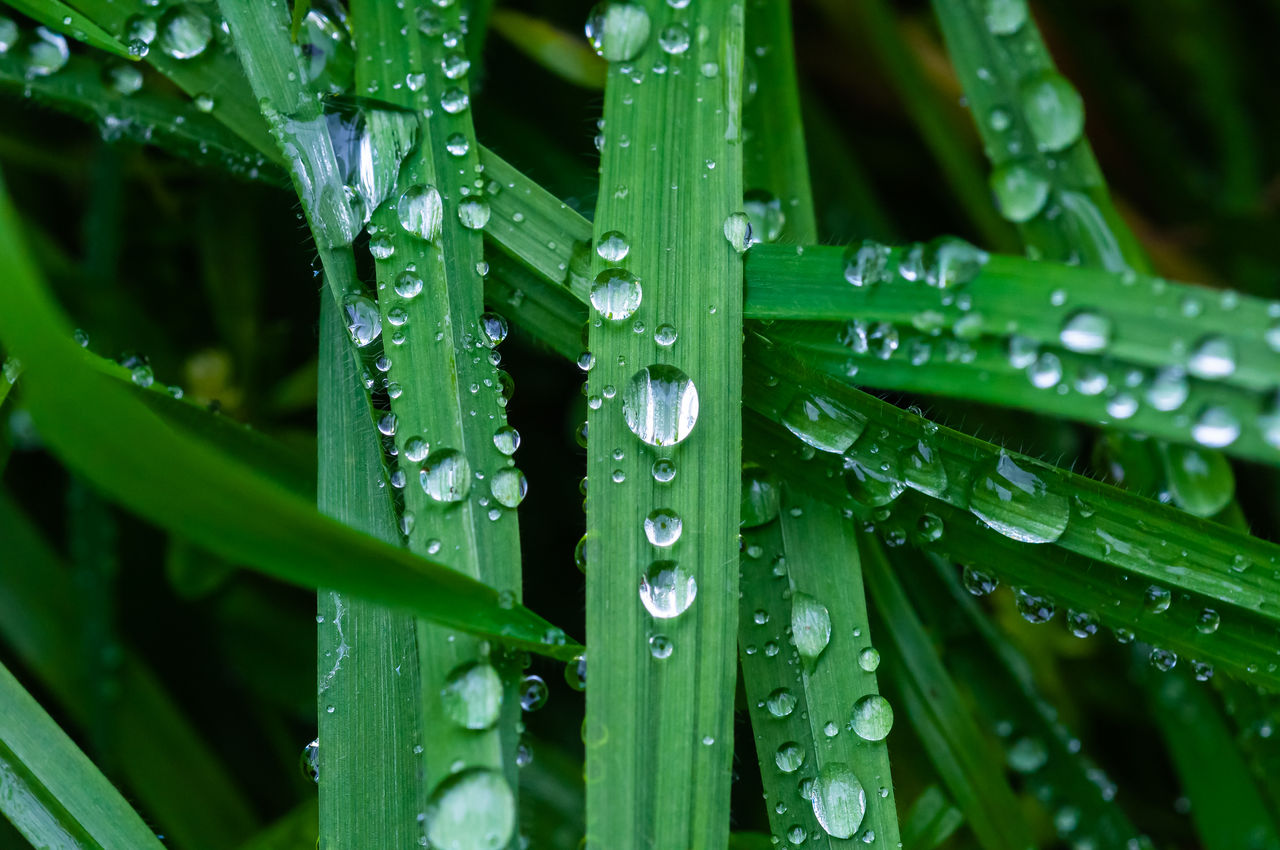 drop, green color, water, wet, growth, plant, nature, close-up, freshness, no people, blade of grass, plant part, grass, leaf, rain, dew, beauty in nature, day, raindrop, purity, outdoors, rainy season