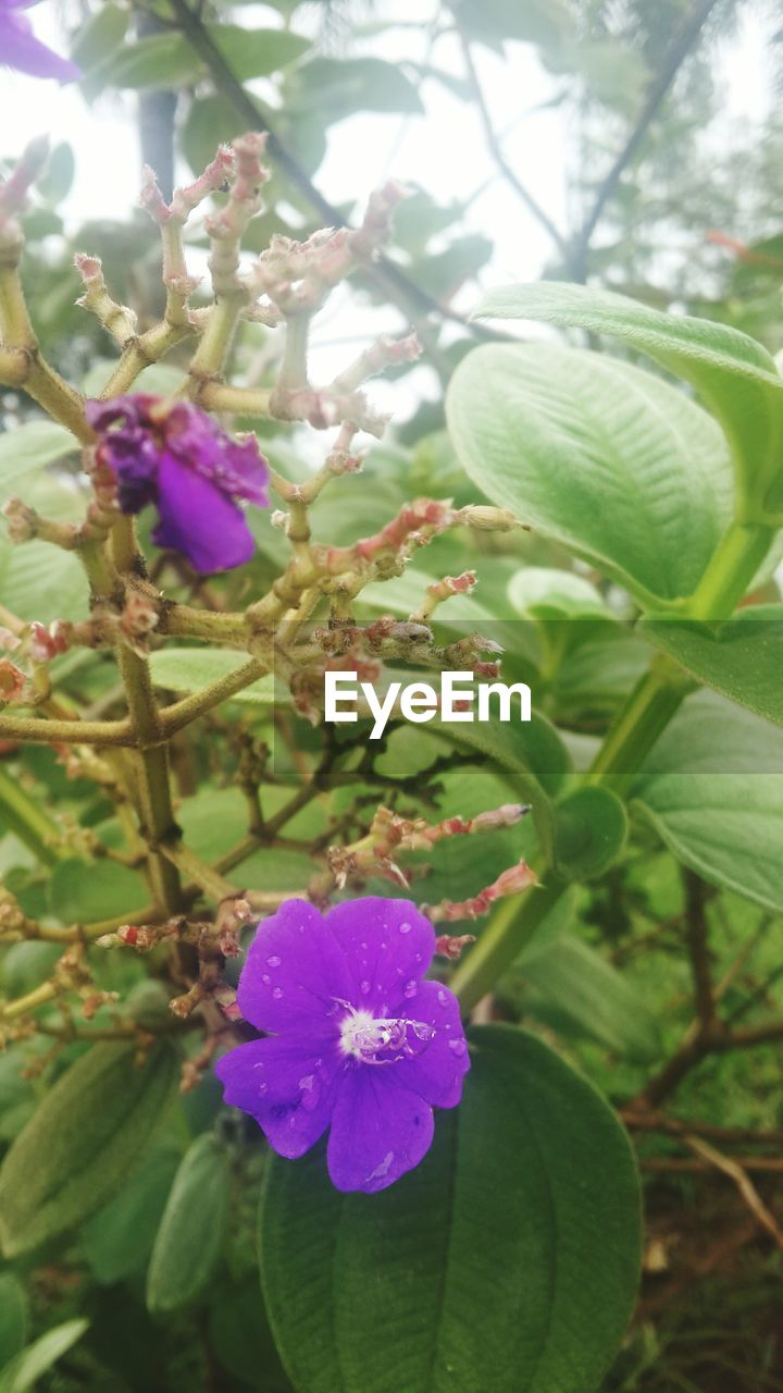 flower, growth, beauty in nature, nature, fragility, plant, petal, freshness, leaf, green color, day, purple, no people, flower head, outdoors, blooming, close-up