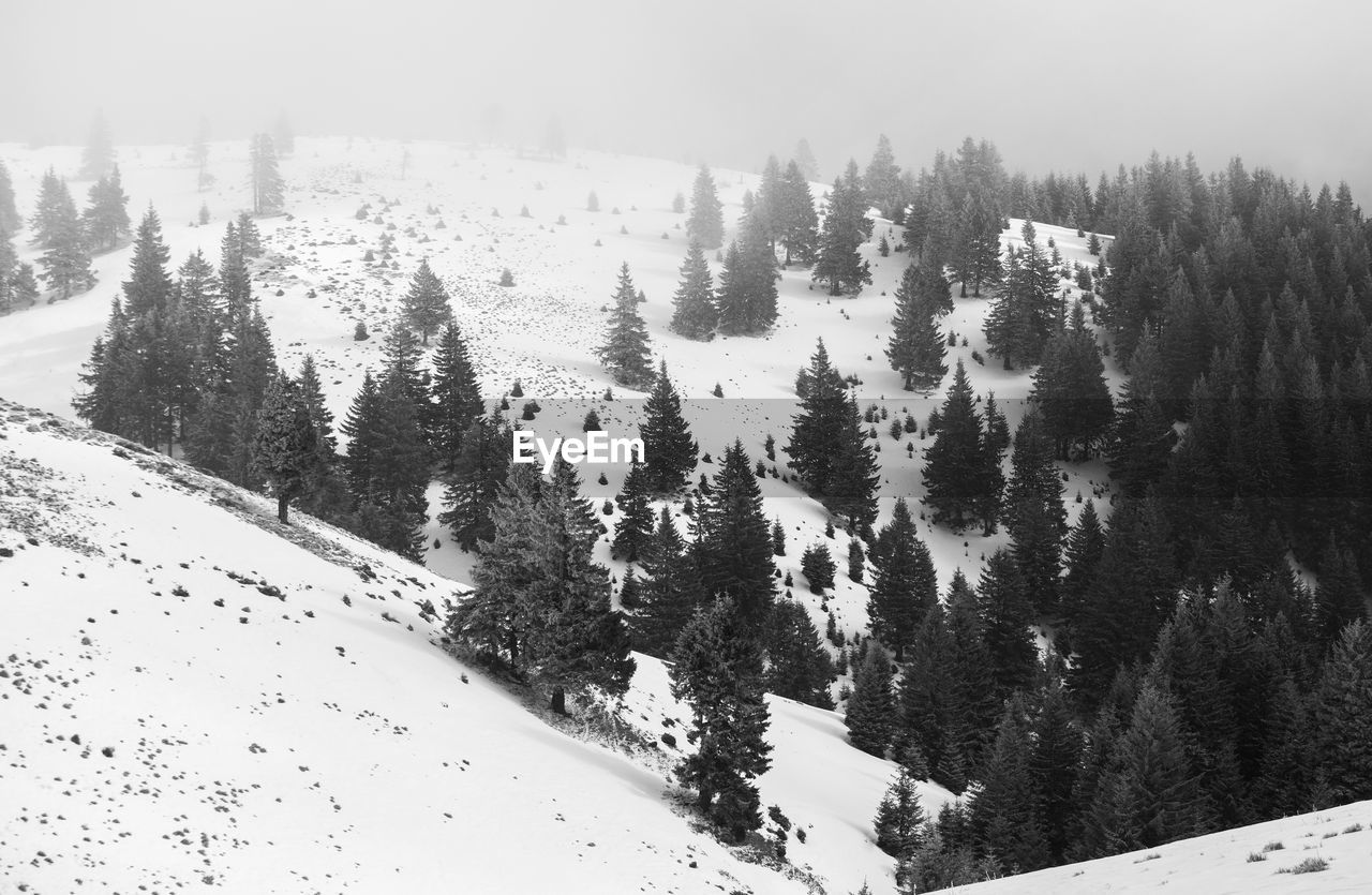 snow, cold temperature, winter, tree, nature, beauty in nature, no people, tranquility, mountain, scenics, tranquil scene, outdoors, landscape, forest, day, sky