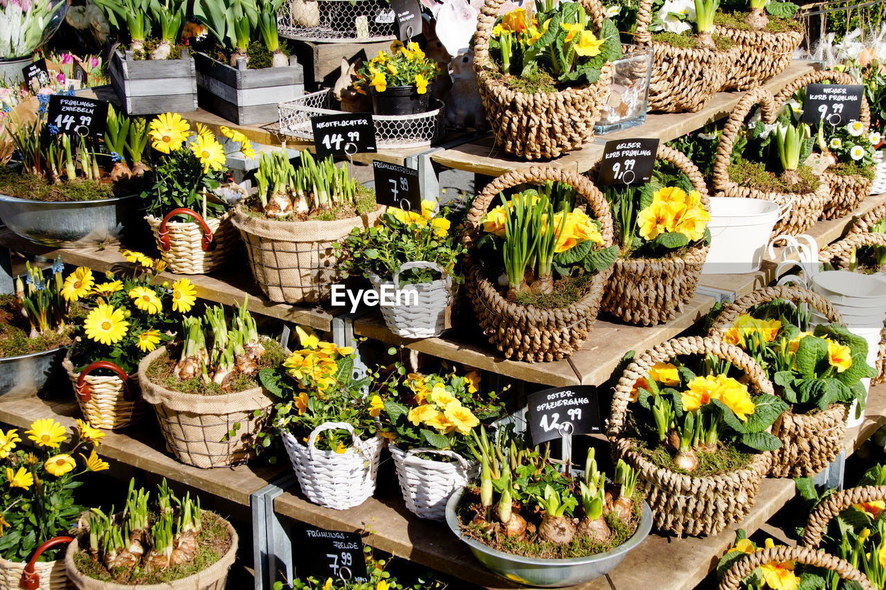 Plants and flowers in baskets at market for sale