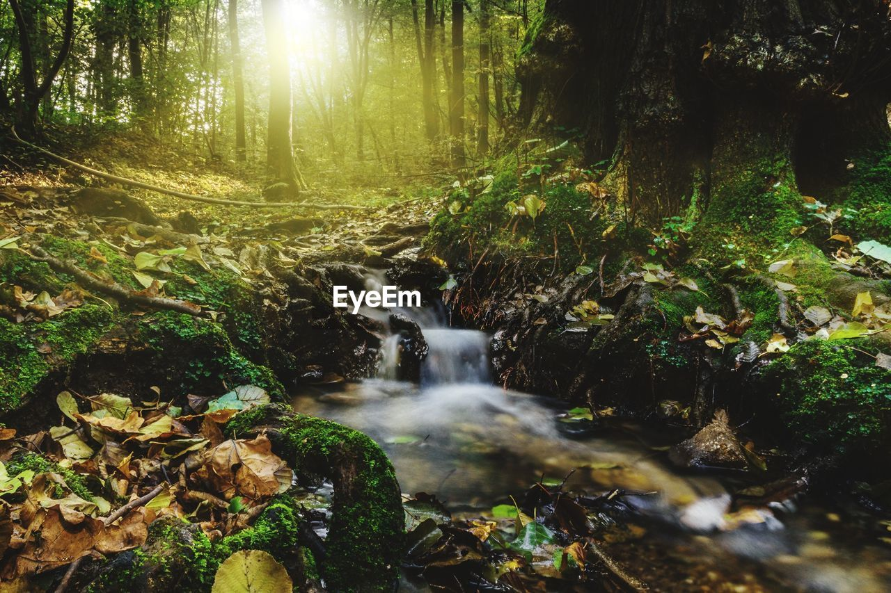 forest, nature, motion, flowing water, long exposure, scenics, waterfall, tranquility, tree, beauty in nature, stream, water, no people, tranquil scene, outdoors, non-urban scene, blurred motion, day, idyllic, sunlight, growth, landscape, tree trunk
