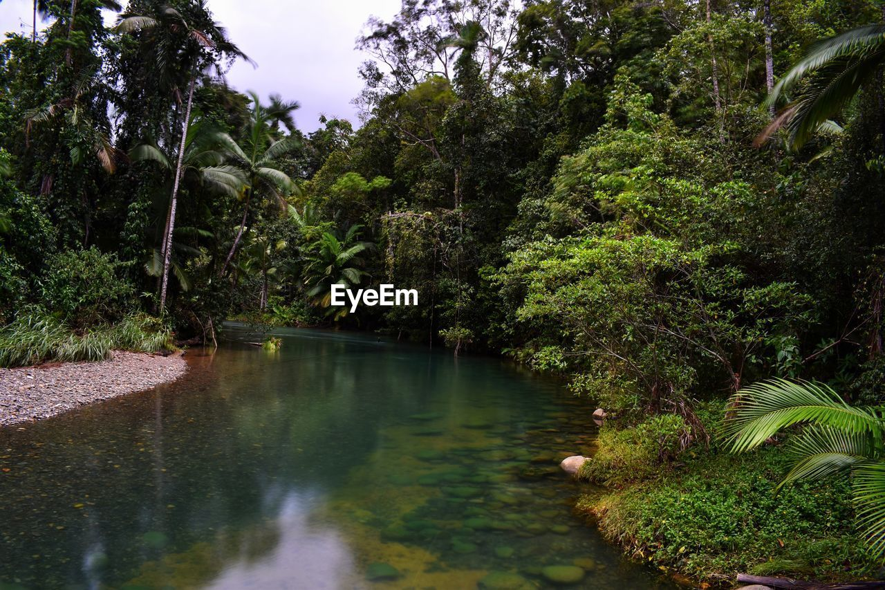plant, tree, water, nature, forest, growth, no people, beauty in nature, tranquility, lake, green color, land, scenics - nature, foliage, tranquil scene, lush foliage, outdoors, environment, reflection, leaves