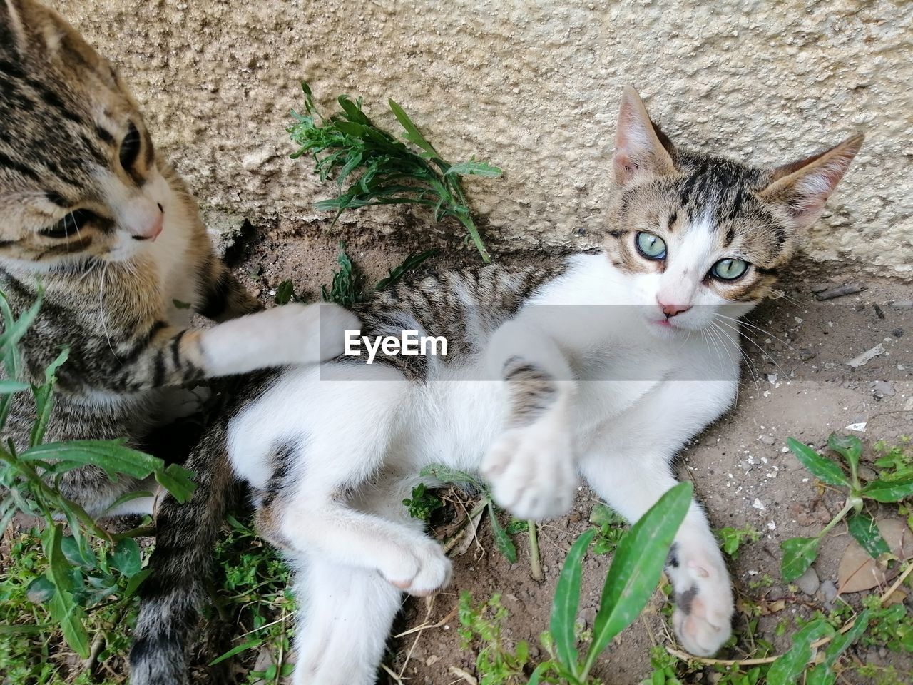 cat, feline, domestic cat, mammal, pets, domestic, vertebrate, animal, domestic animals, animal themes, group of animals, portrait, plant, looking at camera, plant part, no people, leaf, relaxation, young animal, nature, kitten, whisker
